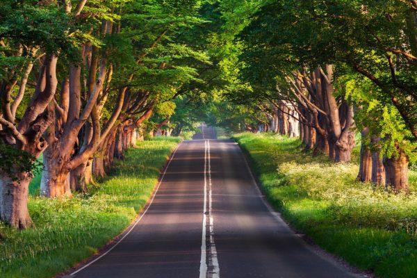 FITUR Se Suma Al Turismo Accesible