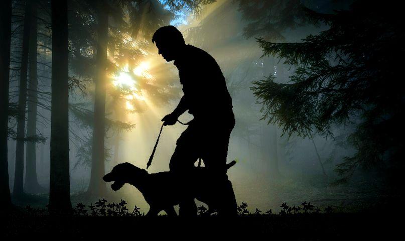 Investigación En Nutrición Para Los Perros Guía, Los 'ojos' De Las Personas Ciegas